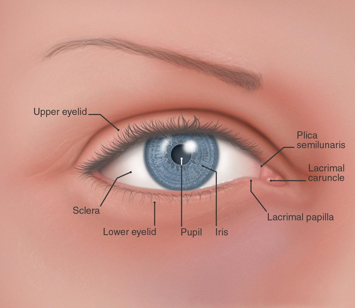 Карункула глаза воспаление фото