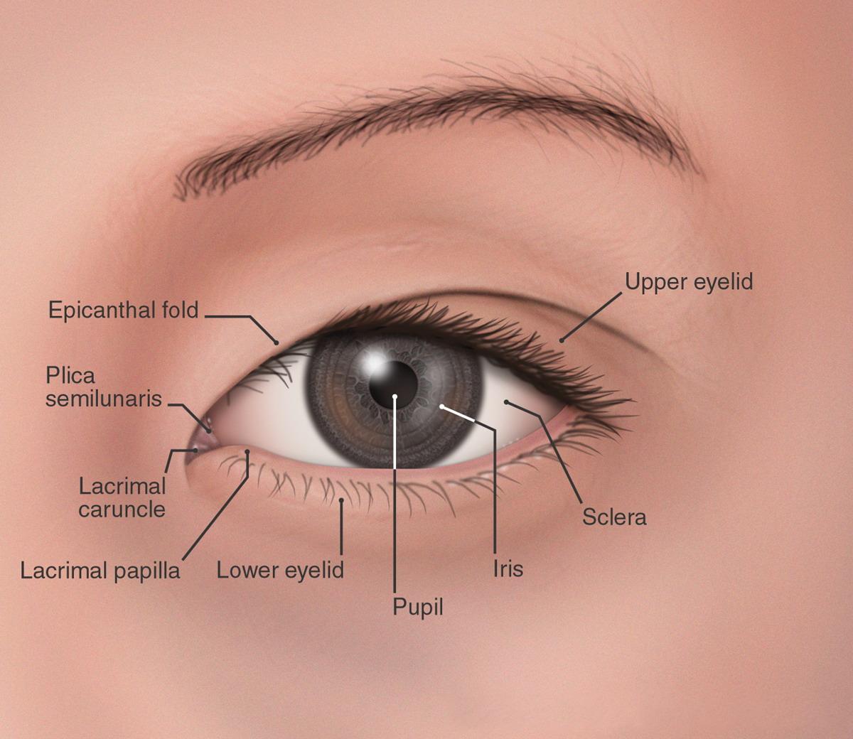 Por que los orientales tienen los ojos rasgados ? - Info - Taringa!
