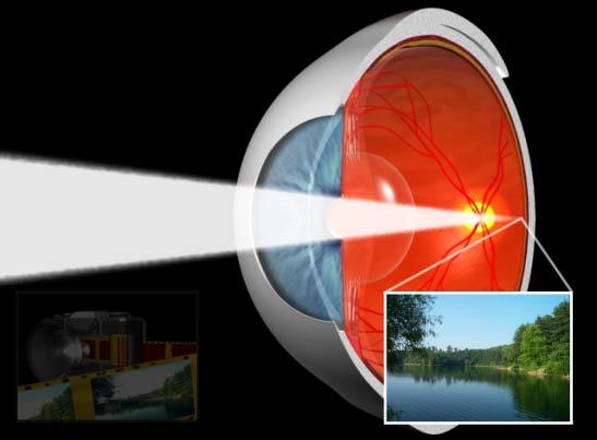 Las imagenes impresionando la retina
