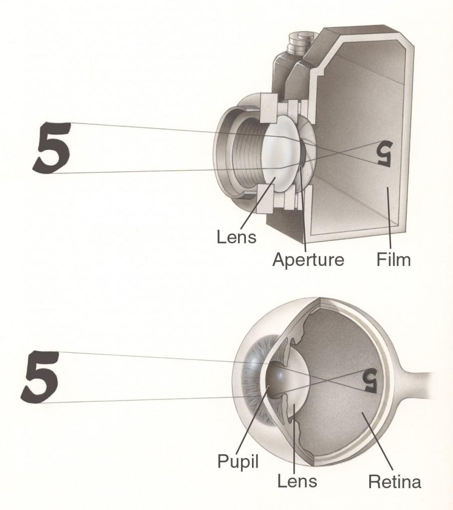 Comparación entre la cámara y el ojo