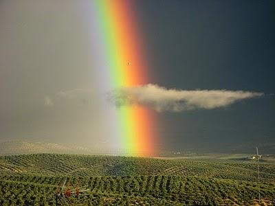 El arco iris de un dalt nico blog de ojos innova - Cual es el color anil ...