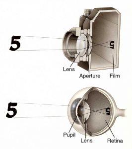 El ojo humano comparado con una cámara fotográfica